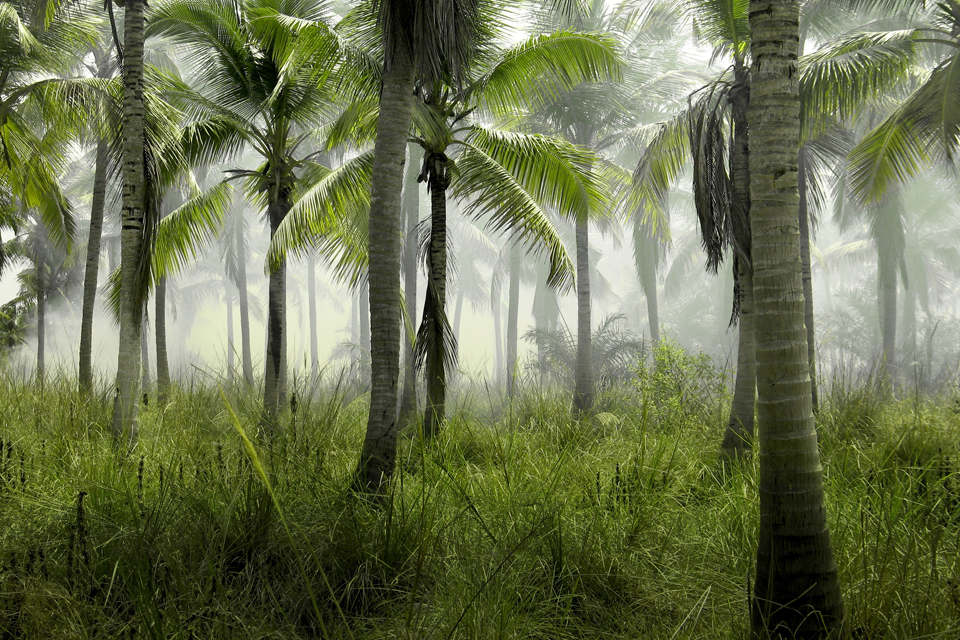 palm-trees-923976